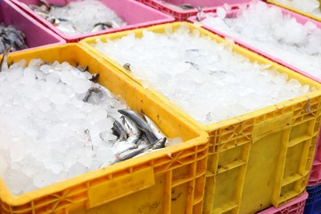 Frozen fish and shellfish